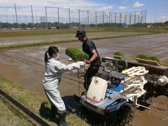 「ひとめぼれ」の苗を6条植えの田植機に設置し準備完了